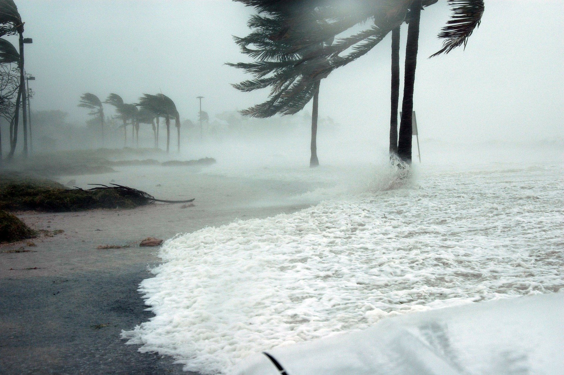 palm trees at coast bend due to strong wind coming from the sea